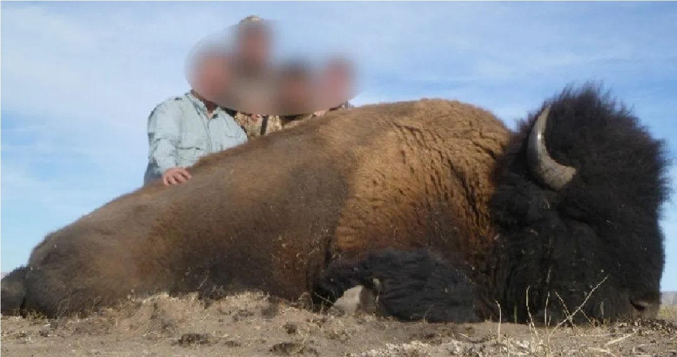 La caza de un bisonte americano en Coahuila indigno a las redes sociales    FOTOS