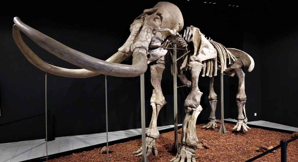 ¿Qué hacer en el Estado de México?, Visita el mamut de más 10 mil 500 años