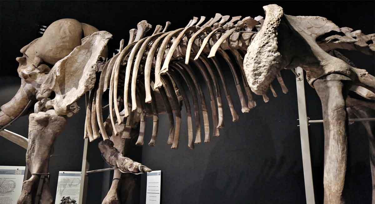 que hacer en el estado de mexico, visital el museo de antropología e historia