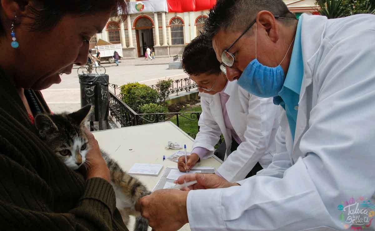 Campaña de vacunación antirrábica 2021 Estado de México: Fechas